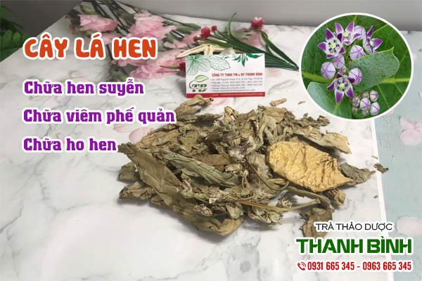 Cây lá hen Thảo dược Thanh Bình