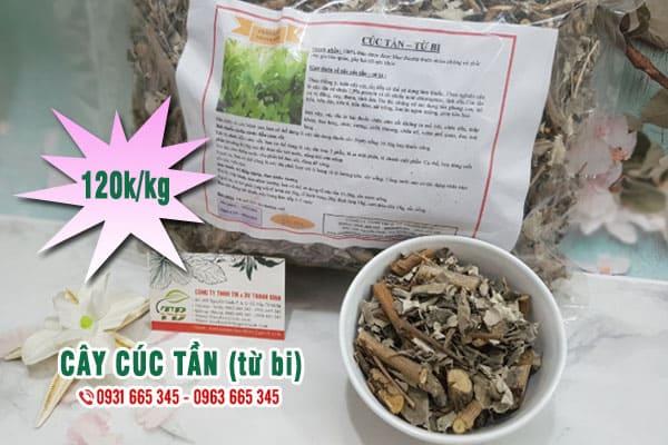 cây cúc tần (từ bi) Thảo Dược Thanh Bình