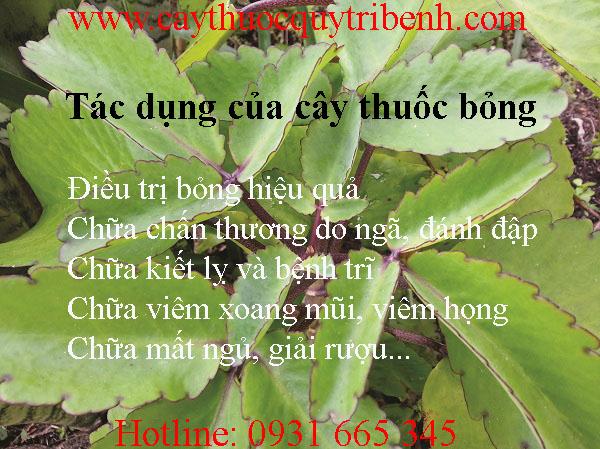 mua-cay-thuoc-bong-o-dau-tai-tp-hcm-uy-tin