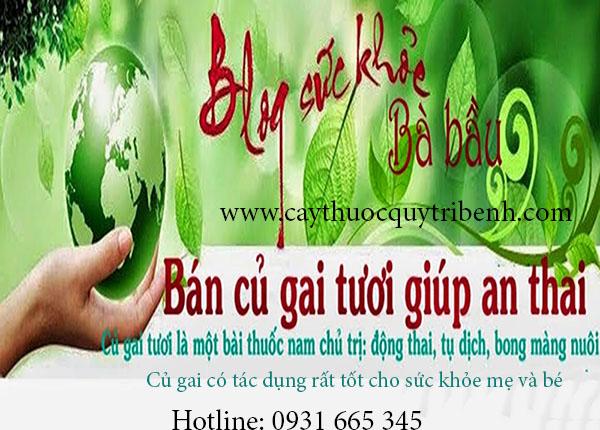 mua-cu-gai-an-thai-o-dau-tai-tp-hcm