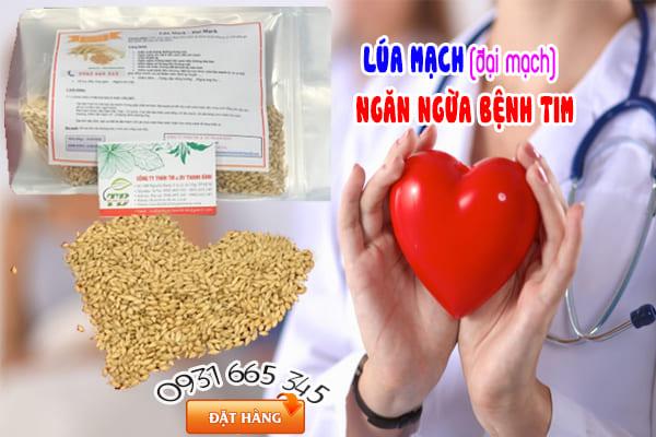đại mạch (yến mạch) Thảo Dược Thanh Bình