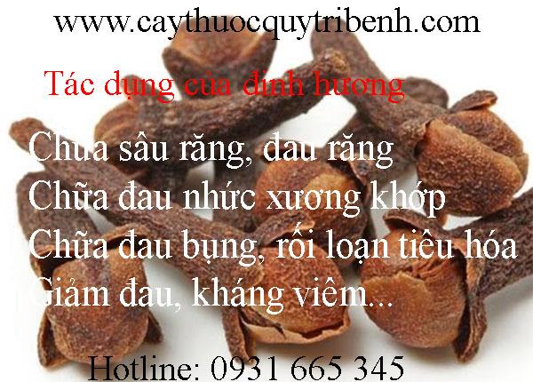 mua-dinh-huong-o-dau-tai-tp-hcm-uy-tin-nhat