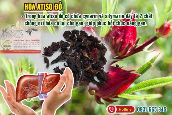 hoa atiso đỏ cây bụp giấm thảo dược thanh bình
