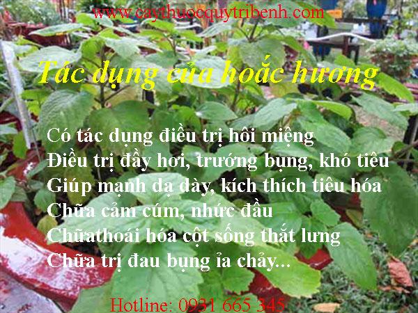 mua-hoac-huong-o-dau-tai-tp-hcm-uy-tin-nhat
