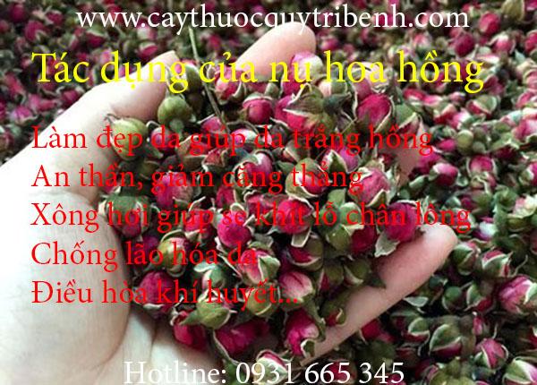 nụ hoa hồng