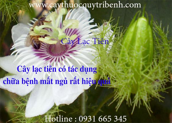 Mua-ban-cay-lac-tien-o-dau-tai-tp-hcm