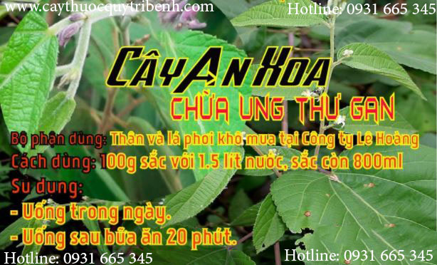 Mua-cay-an-xoa-o-dau-tai-tp-hcm