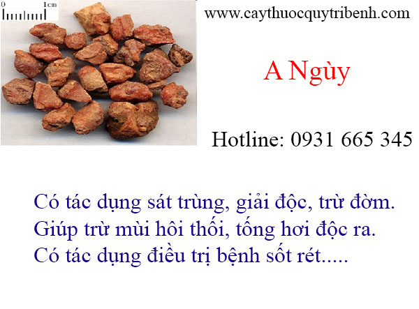 mua-a-nguy-uy-tin-chat-luong-tai-tp-hcm