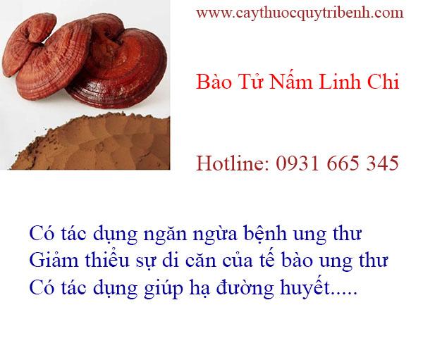 mua-bao-tu-nam-linh-chi-tai-tp-hcm-chat-luong-nhat