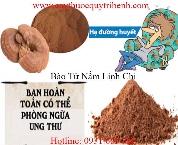 mua-bao-tu-nam-linh-chi-tai-tp-hcm-uy-tin-chat-luong-nhat