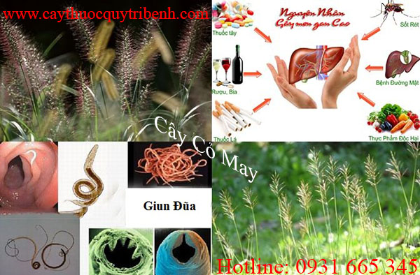 mua-cay-co-may-chat-luong-tai-tp-hcm