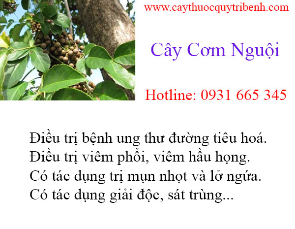 mua-cay-com-nguoi-uy-tin-chat-luong-tai-tp-hcm