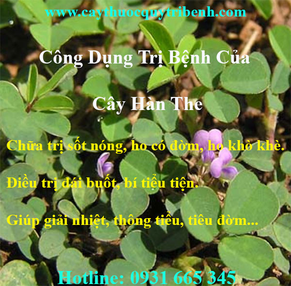 mua-cay-han-the-uy-tin-chat-luong-tai-tp-hcm