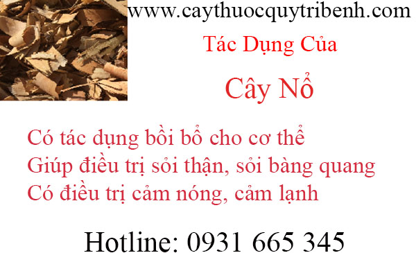 mua-cay-no-chat-luong-tai-tp-hcm