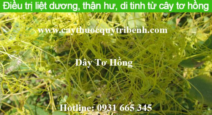 mua-day-to-hong-chat-luong-o-dau-tai-tp-hcm