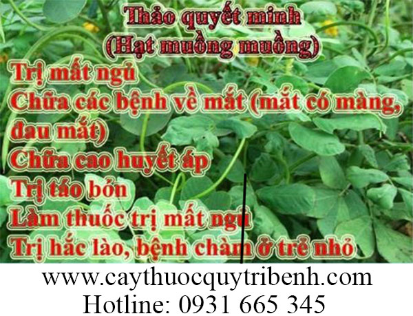 mua-hat-thao-quyet-minh-chat-luong-tai-tp-hcm