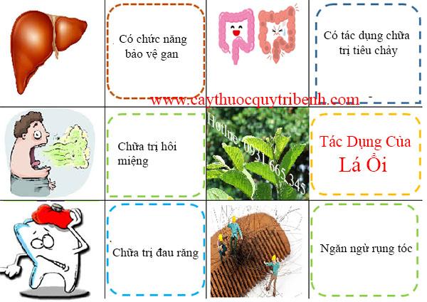 mua-la-oi-chat-luong-tai-tp-hcm