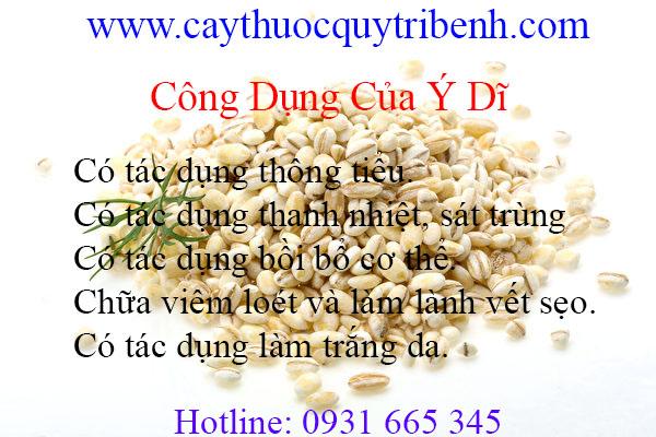 mua-y-di-tai-tp-hcm-uy-tin-chat-luong