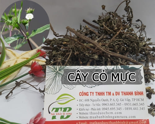Cây cỏ mực có tác dụng gì
