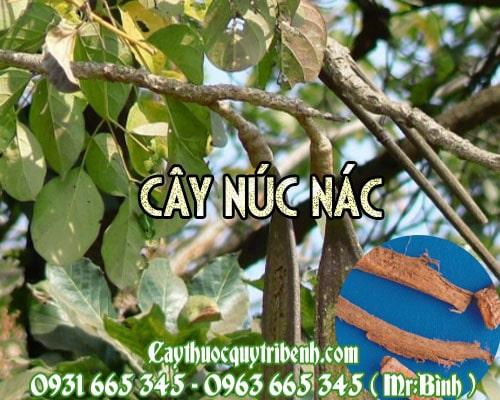 Mua bán cây núc nác tại Cần Thơ giúp điều trị hen phế quản rất tốt