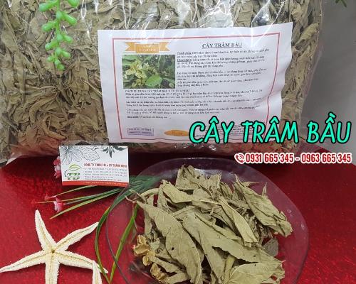 Mua bán cây trâm bầu ở huyện Cần Giờ hỗ trợ điều trị đau cơ hiệu quả