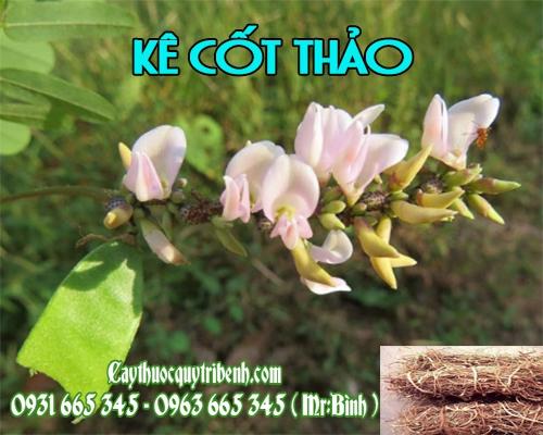 Mua bán kê cốt thảo ở quận Bình Tân hỗ trợ điều trị nóng sốt rất tốt