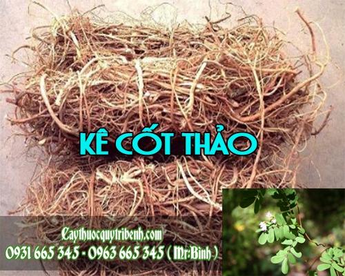 Mua bán kê cốt thảo tại quận Hoàng Mai giúp điều trị nóng sốt vào mùa hạ
