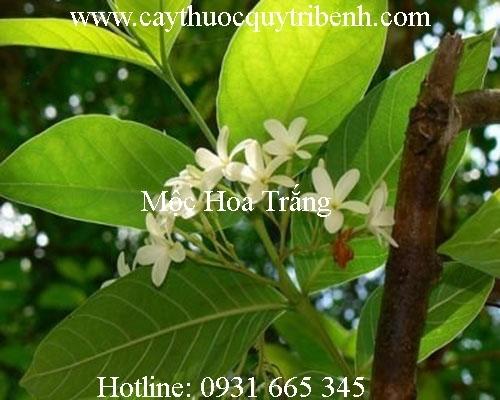 Mua bán mộc hoa trắng tại Bình Phước có tác dụng chữa viêm đại tràng