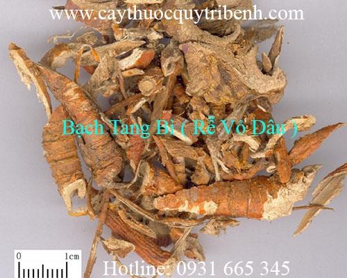 Rễ dâu (tang bạch bì) Thảo Dược Thanh Bình