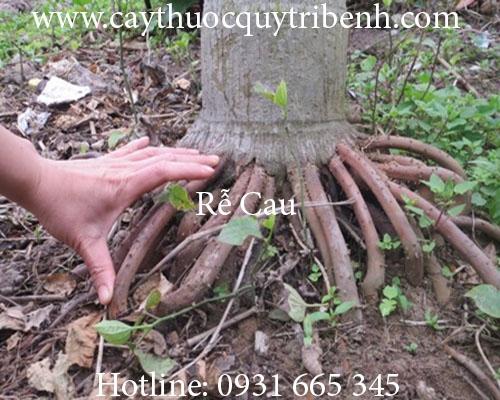 Mua rễ cau ở đâu tại tp hcm ???