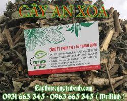 Địa chỉ bán cây an xoa tăng cường chức năng gan tại Hà Nội uy tín nhất