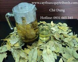Mua bán cây chè dung tại Bình Định có tác dụng hỗ trợ chữa đau dạ dày