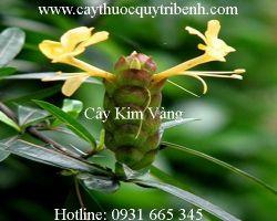 Mua bán cây kim vàng uy tín tại Cà Mau có tác dụng chữa trị cảm cúm