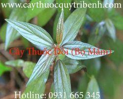 Mua bán cây thuốc dòi (bọ mắm) tại Đồng Tháp có công dụng trị sâu răng