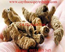 Mua bán củ ba kích tím tại Quảng Ninh chữa trị mộng tinh tốt nhất
