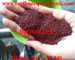 Mua bán hạt đình lịch ở Quảng Nam giúp hút đi chất bẩn làm sạch da
