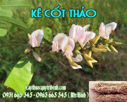 Mua bán kê cốt thảo ở quận Tân Bình có công dụng trị viêm gan mạn tính