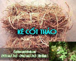 Mua bán kê cốt thảo tại huyện Thanh Trì rất tốt trong việc điều trị bệnh gan