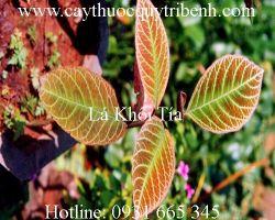 Mua bán lá khôi tía tại Hà Tĩnh có tác dụng giúp ngủ sâu tốt nhất