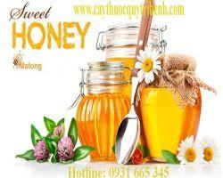 Mua bán mật ong rừng nguyên chất tại Ninh Thuận trị đau họng do ho lâu