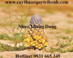 Mua bán nhục thung dung tại Hà Nội giúp ôn thận tráng dương hiệu quả