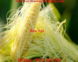 Mua bán rau ngô uy tín tại Trà Vinh có công dụng chữa vàng da tốt nhất