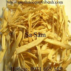 Mua bán sa sâm tại Hà Giang tác dụng giúp làm mát phổi rất hiệu quả