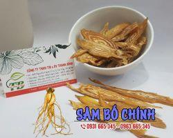 Mua bán sâm bố chính tại huyện Mê Linh điều trị bệnh lao phổi sớm tốt nhất