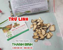 Mua bán trư linh ở huyện Bình Chánh có tác dụng tăng cường miễn dịch