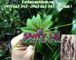 Mua sâm 7 lá - Thất diệp nhất chi hoa ở đâu tại tphcm ???